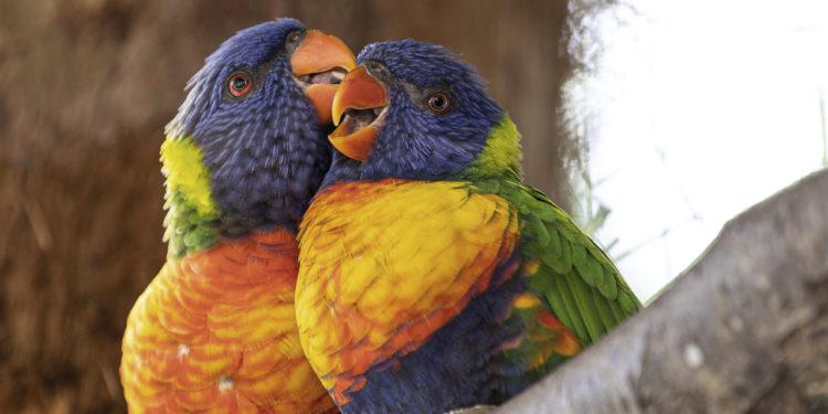 Корма для декоративных птиц.